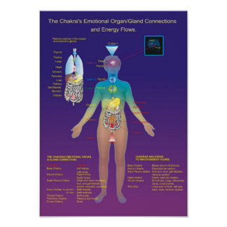 The Chakra Organ / Gland and Energy Flow Poster