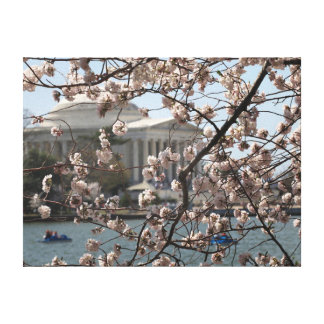 The Cherry Blossoms In Bloom In Washington DC Gallery Wrapped Canvas