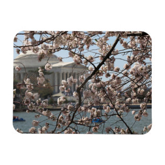 The Cherry Blossoms In Bloom In Washington DC Rectangular Photo Magnet