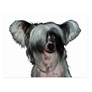The Chinese crested dog Postcard