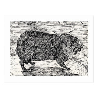 The cony, Or Syrian Rock Hyrax Postcard