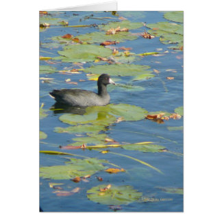 The Coot Greeting Card