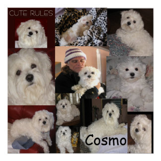 The Cosmo Poster by lin