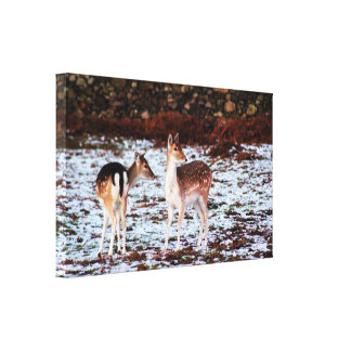 The Couple (deer) Canvas Print