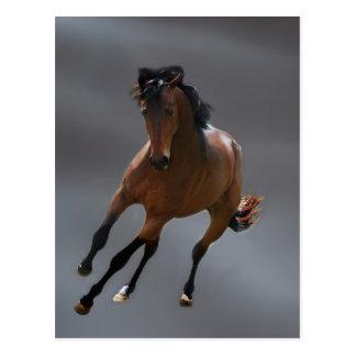 The cowboy horse called Riboking Postcard