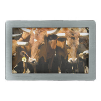 The cows came home belt buckle