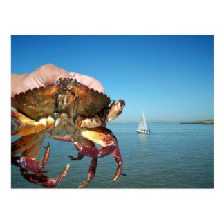 The crab and the sail boat, post card