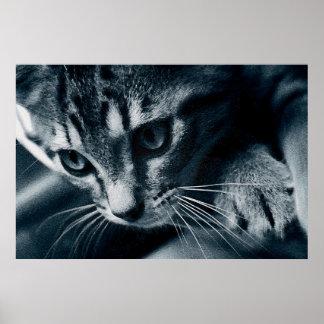 The Curious Feline 36 x 24 Poster