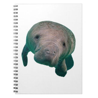 THE CURIOUS ONE NOTEBOOK