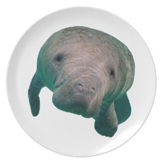 THE CURIOUS ONE PLATE