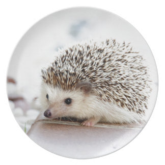 The Cute Baby Hedgehog Plate