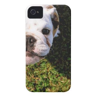 The cutest Bulldog ever!!! iPhone 4 Case-Mate Case