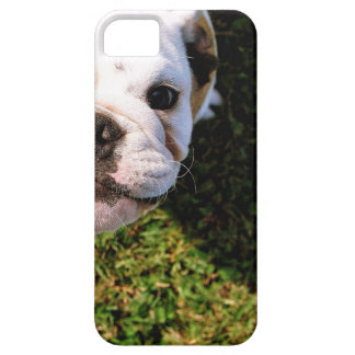 The cutest Bulldog ever!!! iPhone 5 Cases