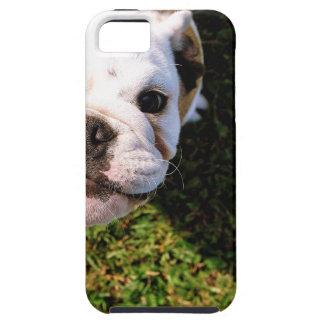 The cutest Bulldog ever!!! Tough iPhone 5 Case