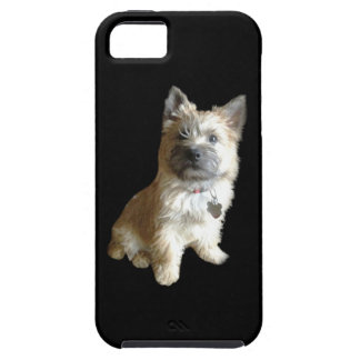 The Cutest Cairn Terrier Ever!  Cuter than Toto! iPhone 5 Cover