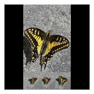 The dance of the butterfly poster