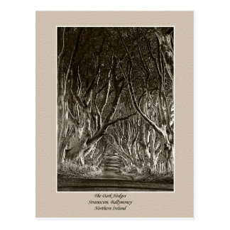 The Dark Hedges, Stranocum, Ballymoney NI postcard