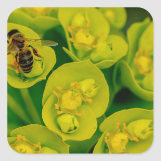 The Desert Gopher Plant Square Sticker