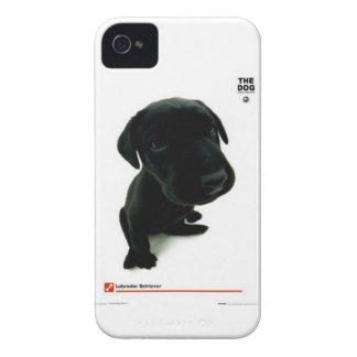 the dog case