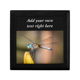 The Dragonfly Gift Box