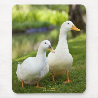 The duck whose two are white mouse pad