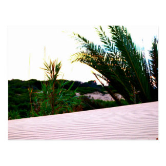 The dunes of La Marina, Spain - postcard
