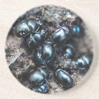 The dung beetles Anoplotrupes stercorosus Coasters