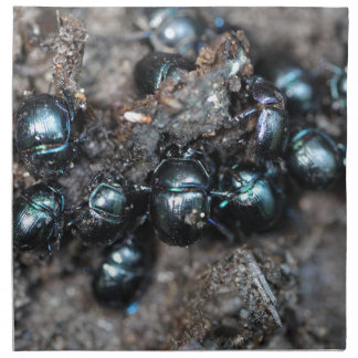 The dung beetles Anoplotrupes stercorosus Napkin