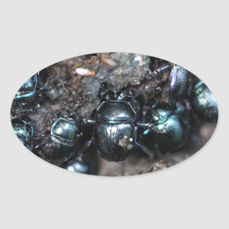 The dung beetles Anoplotrupes stercorosus Oval Sticker