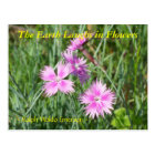 THE EARTH LAUGHS IN FLOWERS - DIANTHUS POSTCARD