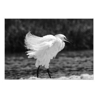 The Egret Dance Photograph