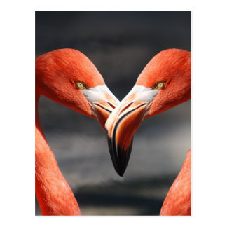 The elegent birds - the symbol for love postcard