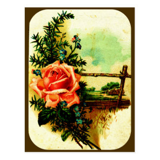 The Enduring Rose (framed) Postcard