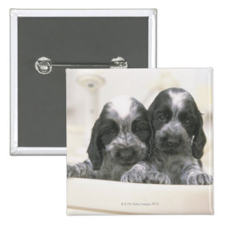 The English Cocker Spaniel is a breed of dog. It 15 Cm Square Badge
