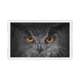 The Evil Eyes. ( Eagle Owl, Bubo Bubo)