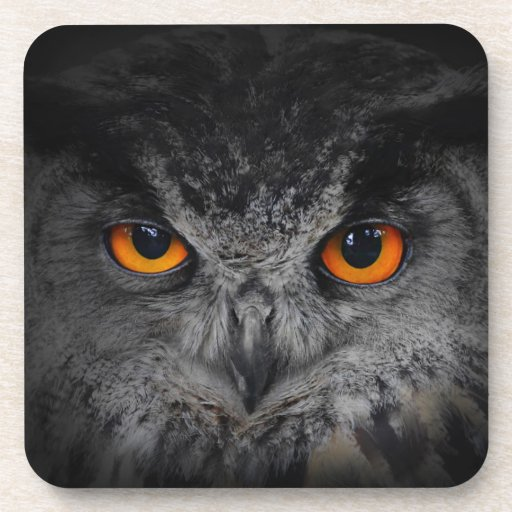 The Evil Eyes. ( Eagle Owl, Bubo Bubo) Coasters