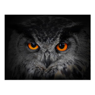 The Evil Eyes. ( Eagle Owl, Bubo Bubo) Postcards
