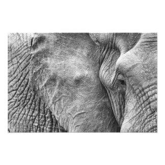 The eye of an elephant photograph