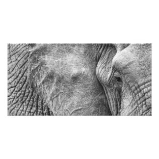 The eye of an elephant picture card