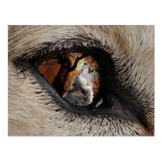 The Eye of the Wolf Postcard