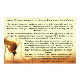 The Facts: Wolbachia-Infected Aedes by RoseWrites Flyer