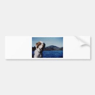 "The famous ""Pesky"" from Kellum Pond Bumper Sticker"