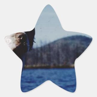 "The famous ""Pesky"" from Kellum Pond Star Sticker"