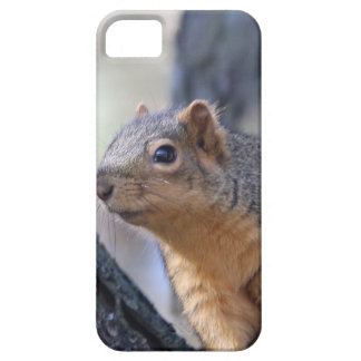The fast and the furriest iPhone 5 cover