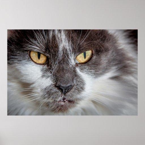The Feline Stare - Print