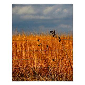 The Field Photo Print