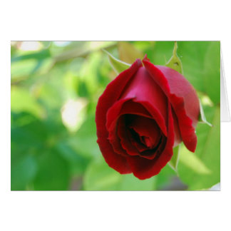 The First Rose of Spring Card