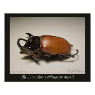 The Five Horns Rhinocero Beetle Poster