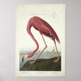 The Flamingo Takes a peek Poster