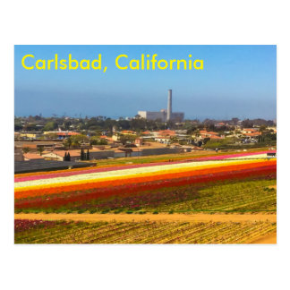 The flower fields postcard